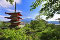 日本 山梨県 新倉山浅間公園 新緑の忠霊塔と富士山