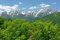 長野県 大町市 新緑の権現山から見た鹿島槍ヶ岳と爺ヶ岳