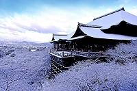京都府 清水寺 雪景色