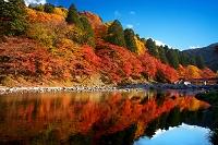 愛知県 紅葉の香嵐渓