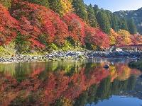 愛知県 香嵐渓 紅葉