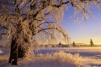 カナダ プリンスエドワード島 霜が降りた木