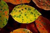 秋の色 落ち葉