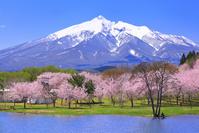 青森県 津軽富士見湖畔の桜と残雪の岩木山