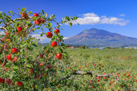 青森県 りんご公園から岩木山