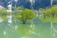山形県 飯豊町 白川湖
