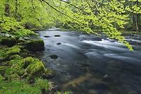スイス 川と森林