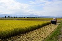 滋賀県 琵琶湖畔 マキノの田園