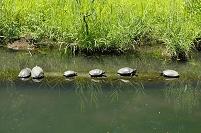 亀 水生植物園