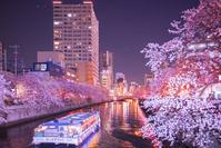 大岡川の夜桜と街灯り