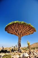 イエメン ソコトラ島