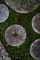 京都府 石臼と苔