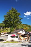 兵庫県 建物の屋根を突き抜ける木