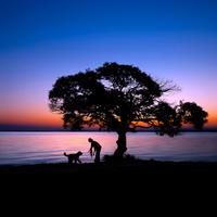 湖畔を散歩する飼い主と犬のシルエット