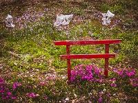 赤く小さな鳥居が立つお花畑