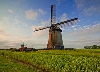 オランダ シャーマーホーン