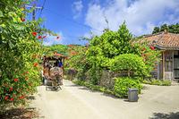 沖縄県 水牛車とブーゲンビリア