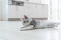 床に寝そべる仔猫
