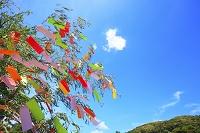 風に揺れる七夕の笹飾りと青空に浮かぶハート形の雲