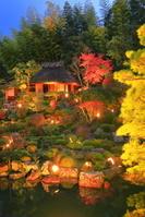 京都府 ライトアップの等持院