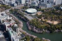 東京都 満開の桜の千鳥ヶ淵と北の丸公園と日本武道館周辺