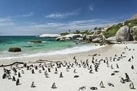 南アフリカ 西ケープ