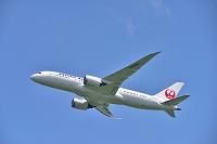 JAL B787-8 Dreamliner