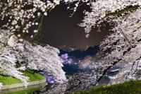 東京都 千鳥ヶ淵の夜桜