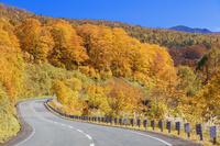 秋田県 栗駒山と秋のブナ林と道路