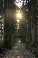 長野県 戸隠神社 杉並木