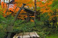 京都 大徳寺 高桐院の井戸