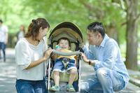 新緑の並木道を散歩する家族