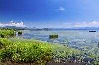 福島県 猪苗代湖盛夏