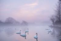 茨城県 水戸市 白鳥