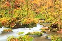 青森県 奥入瀬渓流 不老の滝付近の流れ