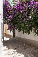 スペイン アンダルシア グラナダ