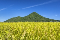 滋賀県 近江富士とイネ
