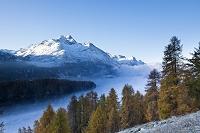 スイス 黄葉とシルス湖