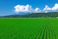 山形県 水田と鳥海山