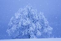 長野県 北竜湖畔 雪降る湖畔と木立ち