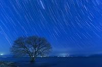 滋賀県 琵琶湖と一本の木と星