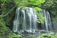 福島県 達沢不動滝と新緑