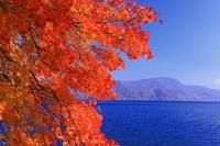 秋田県 十和田湖畔紅葉