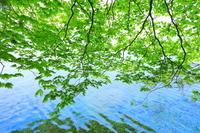 秋田県 十和田湖畔新緑