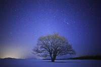 北海道 ハルニレと星空