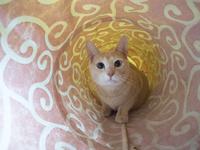 東京の家猫