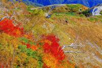 長野県 紅葉の八方尾根より八方池