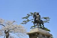 宮城県 桜と伊達政宗・騎馬像