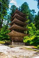 山形県 初夏の羽黒山五重塔