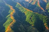 奈良県 ナメゴ谷の紅葉